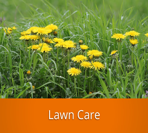 Lawn Care by Jack's Lawn & Snowplowing, Inc.